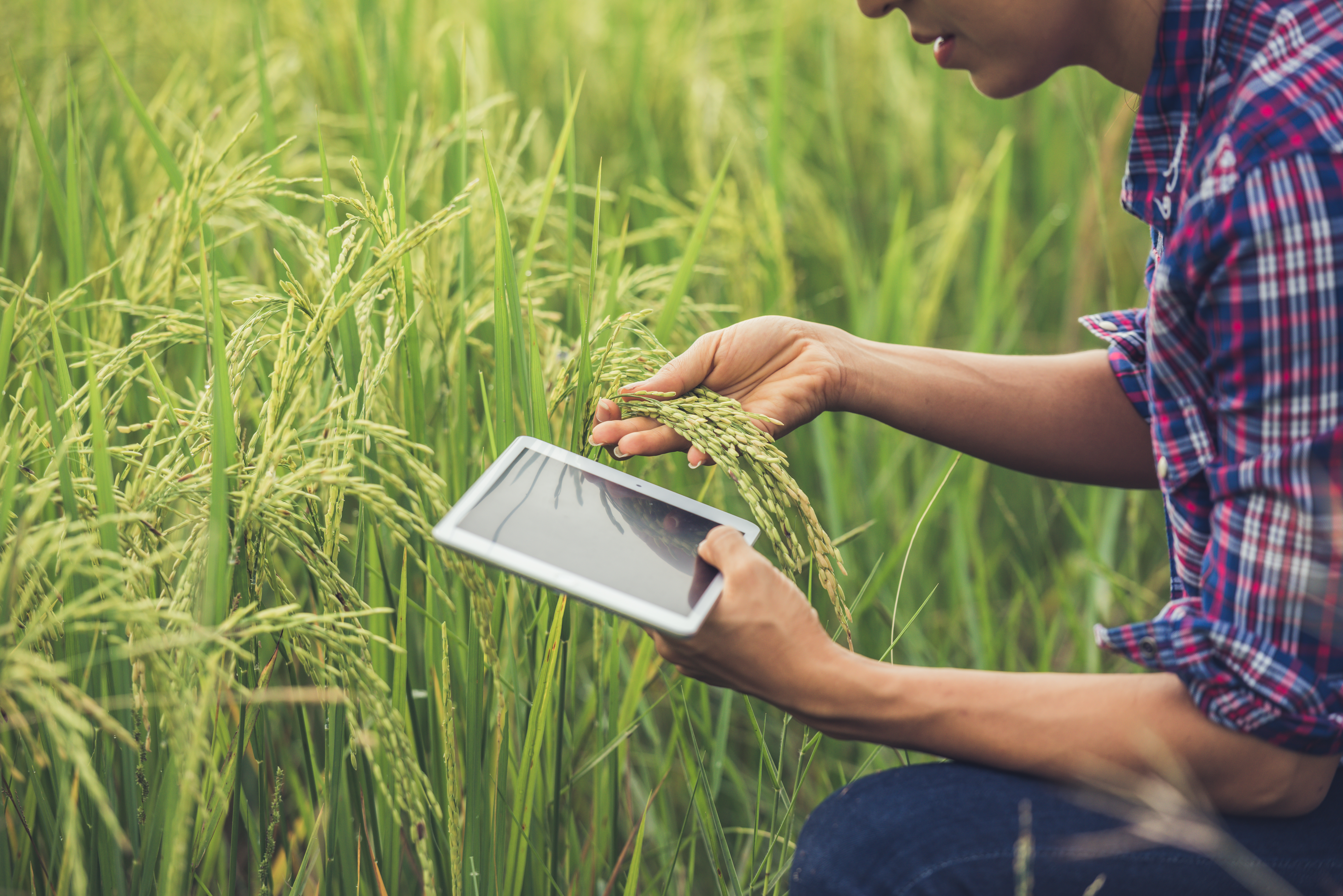 Organize os processos comerciais e venda mais no Agro